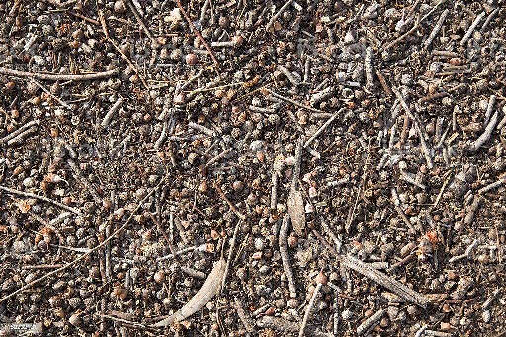 Gumnut Leaf Litter stock photo