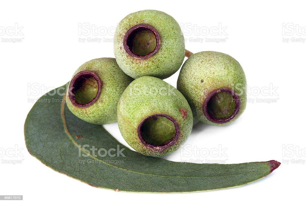 Gumnuts and Leaf stock photo