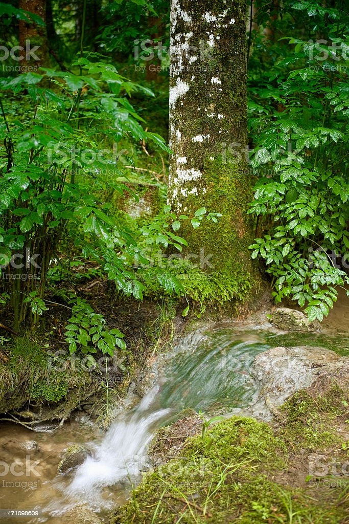 gurgling creek in forest stock photo