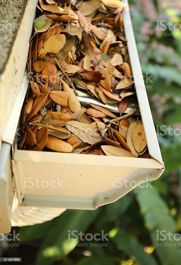 gutter and downspout clogged with leaves stock photo