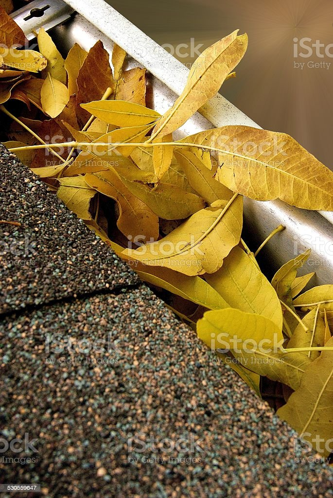 Guttered Leaves royalty-free stock photo