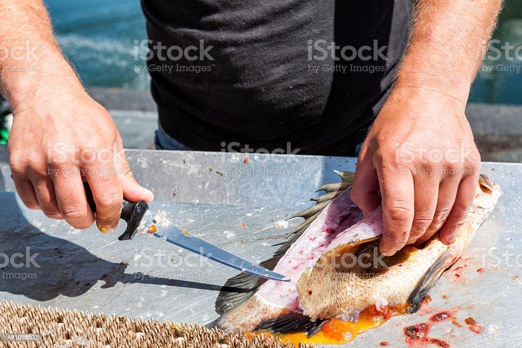 Gutting Fish stock photo