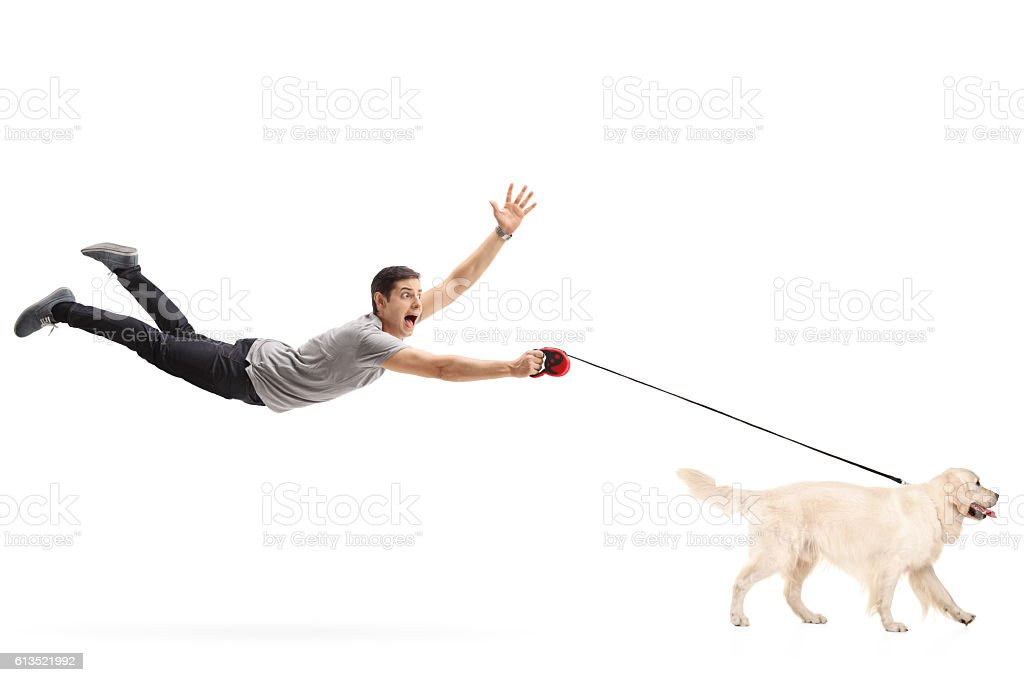 Guy being pulled by his dog stock photo