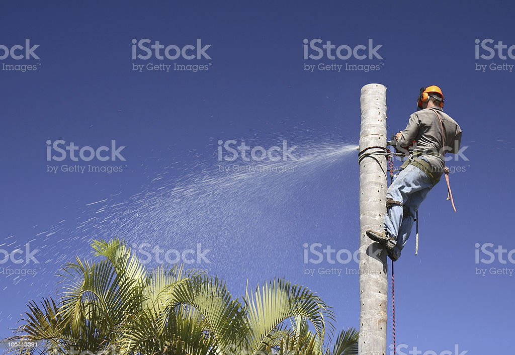 A guy cutting a tree while hanging on it royalty-free stock photo