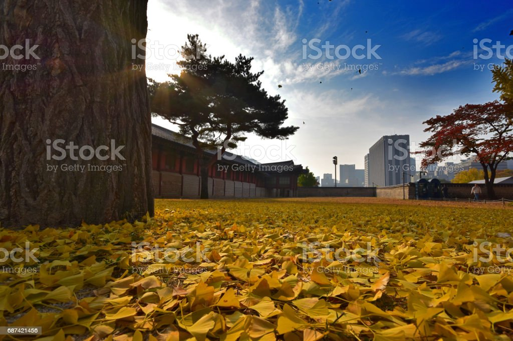 Gyeongbokgung Palace in Autumn Seoul South Korea stock photo
