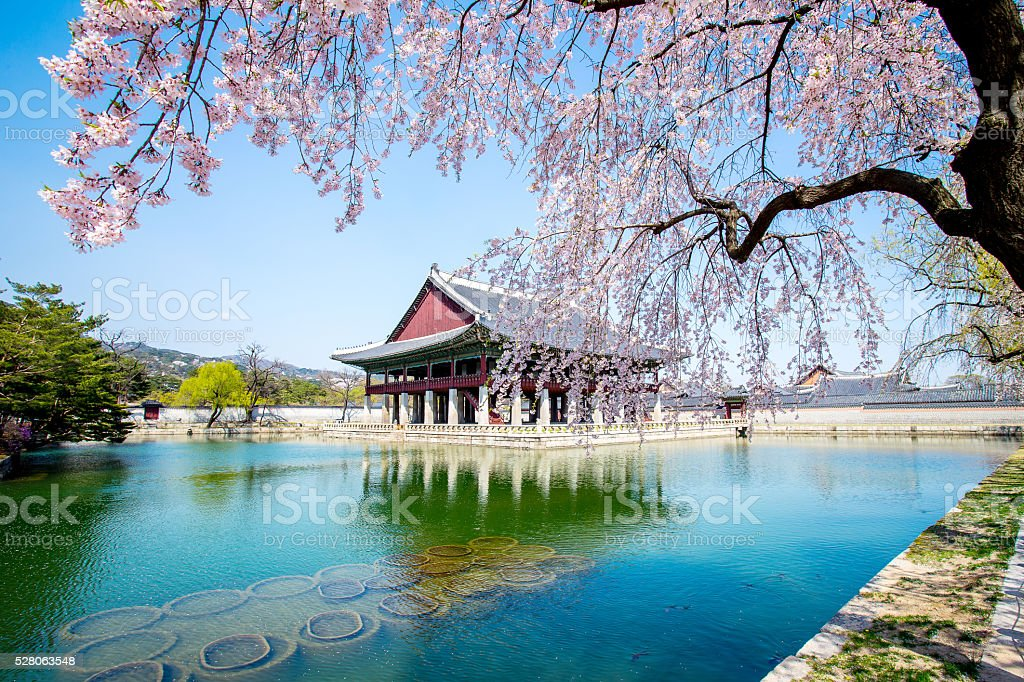 Gyeongbokgung Palace with cherry blossom in spring,Korea stock photo
