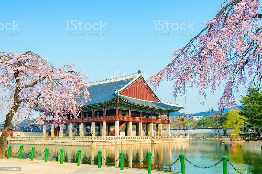 Gyongbokgung Palace with cherry blossom in spring stock photo