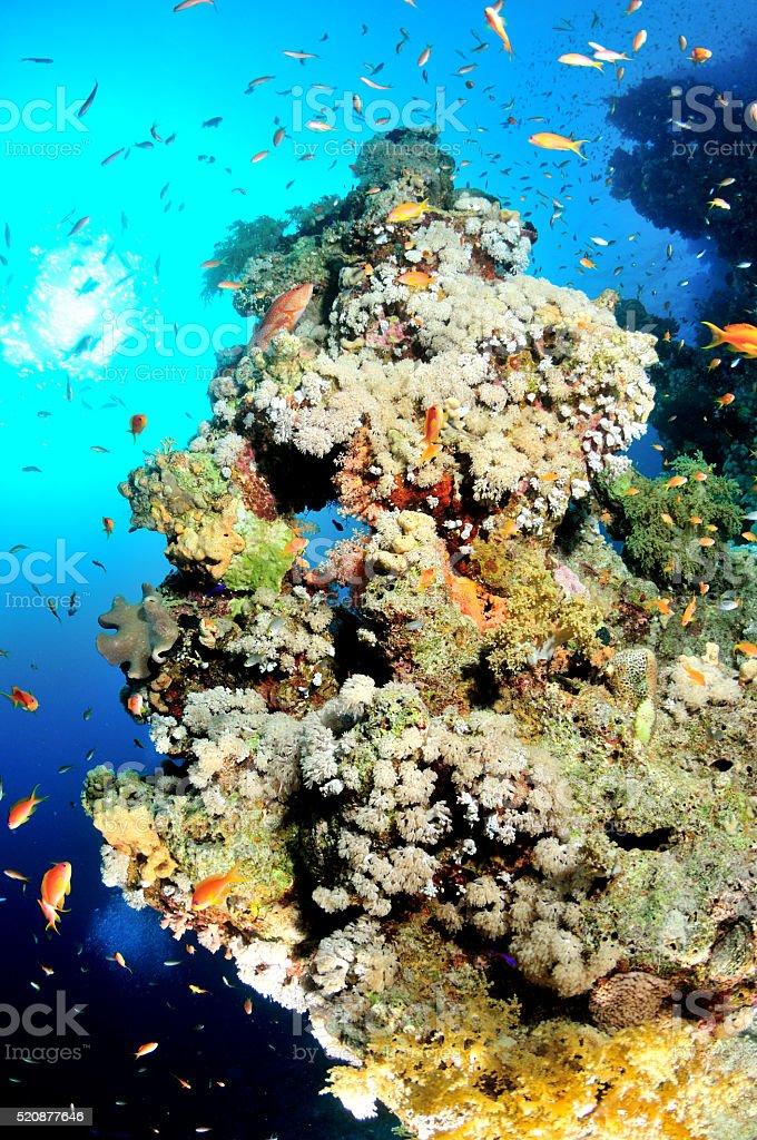Ägypten Unterwasser foto royalty-free