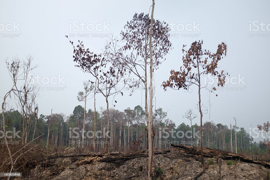 Habitat Destructiion stock photo