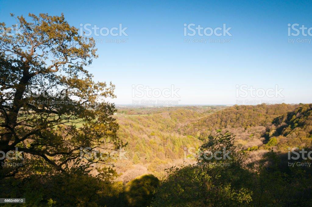 Hackfall Gorge stock photo