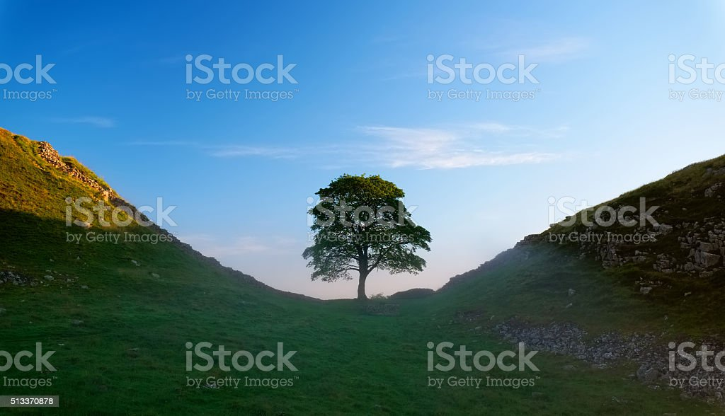 Hadrian's Wall And Sycamore Gap At Dawn stock photo