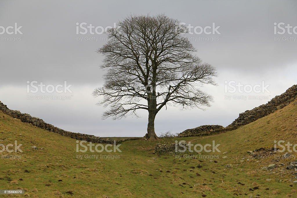 Hadrian's Wall (Robin Hood Tree) stock photo