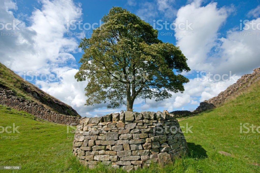 Hadrian's wall Robin Hood tree royalty-free stock photo