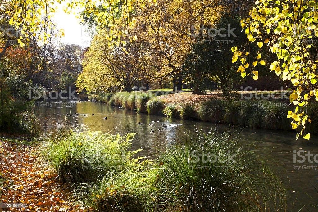 Hagley Park in Autumn stock photo