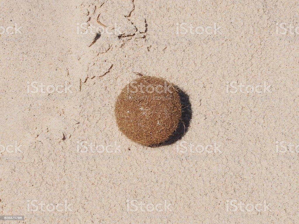 Hair ball stock photo