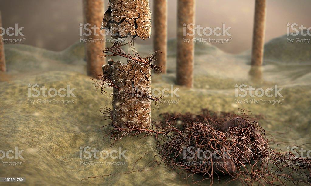 hair, fungus stock photo