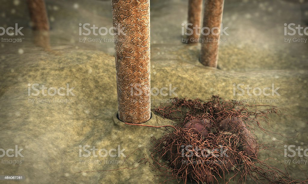 hair, fungus royalty-free stock photo