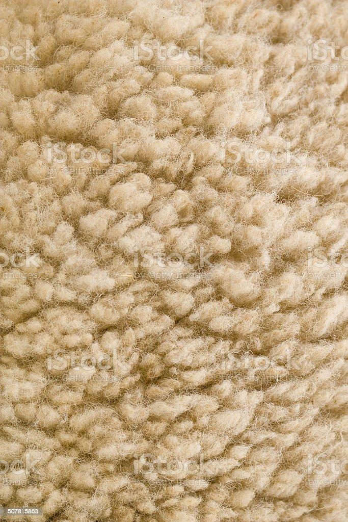 Hair sheep stock photo
