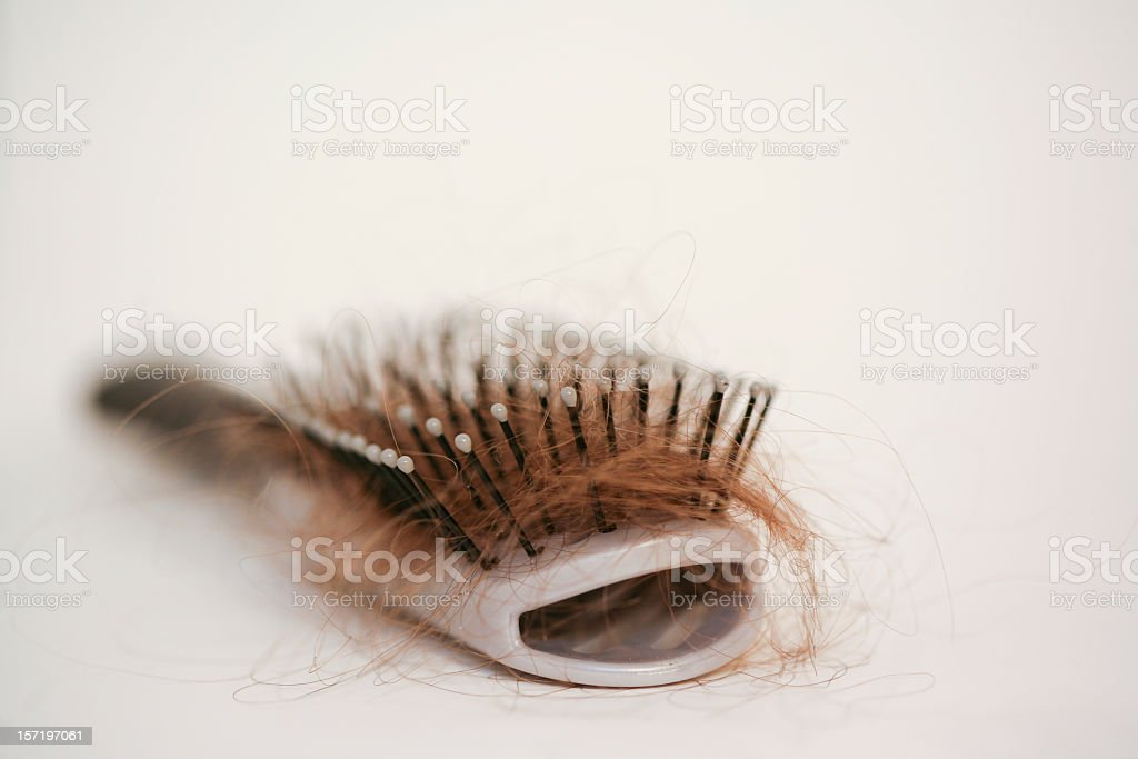 Hairbrush with strands of auburn hair stuck in it stock photo