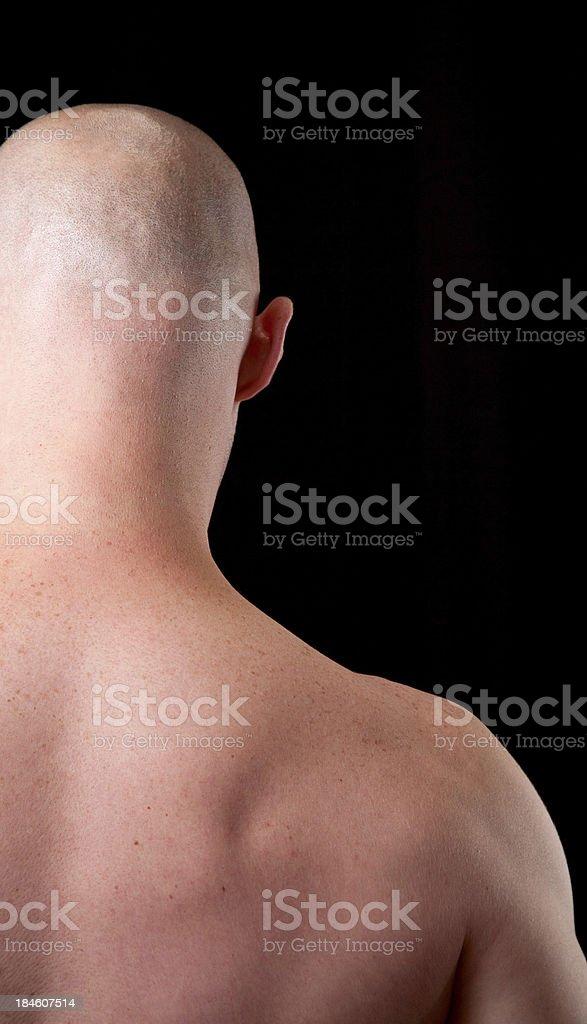 Hairless stock photo