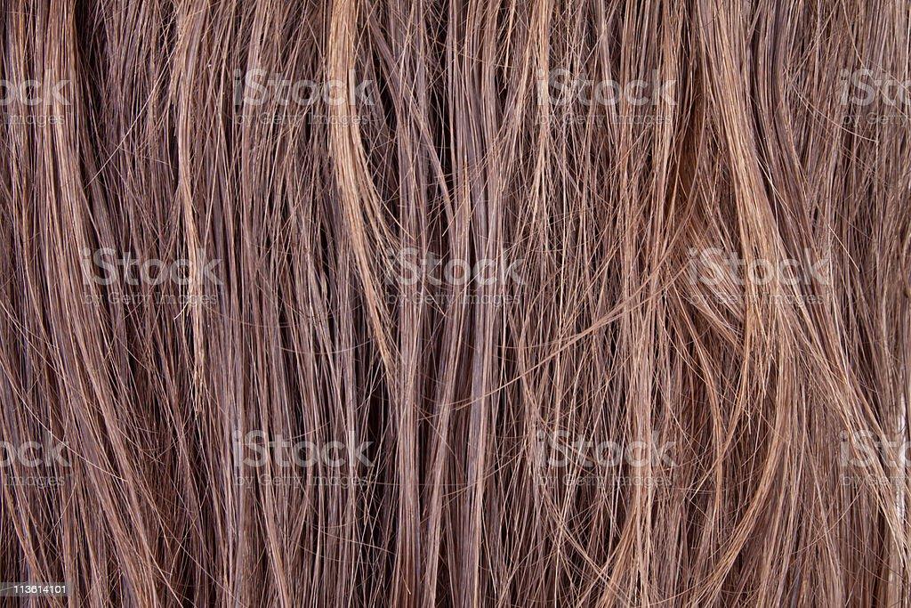 hairs stock photo