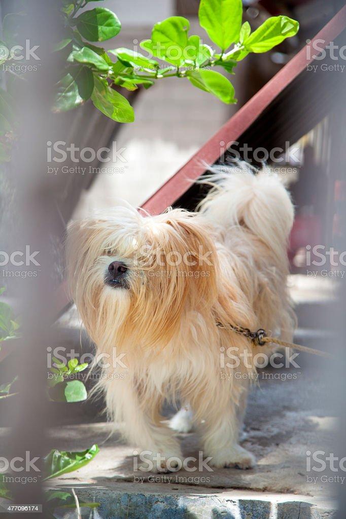 Poilu de chien ! photo libre de droits