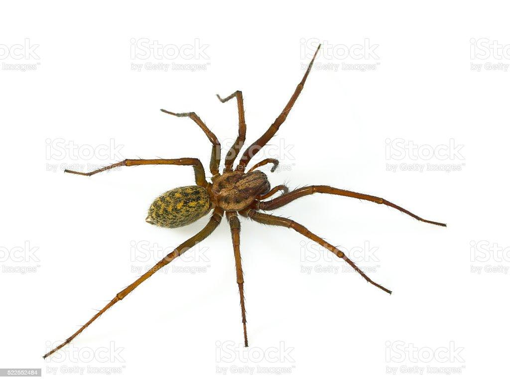 Hairy spider stock photo