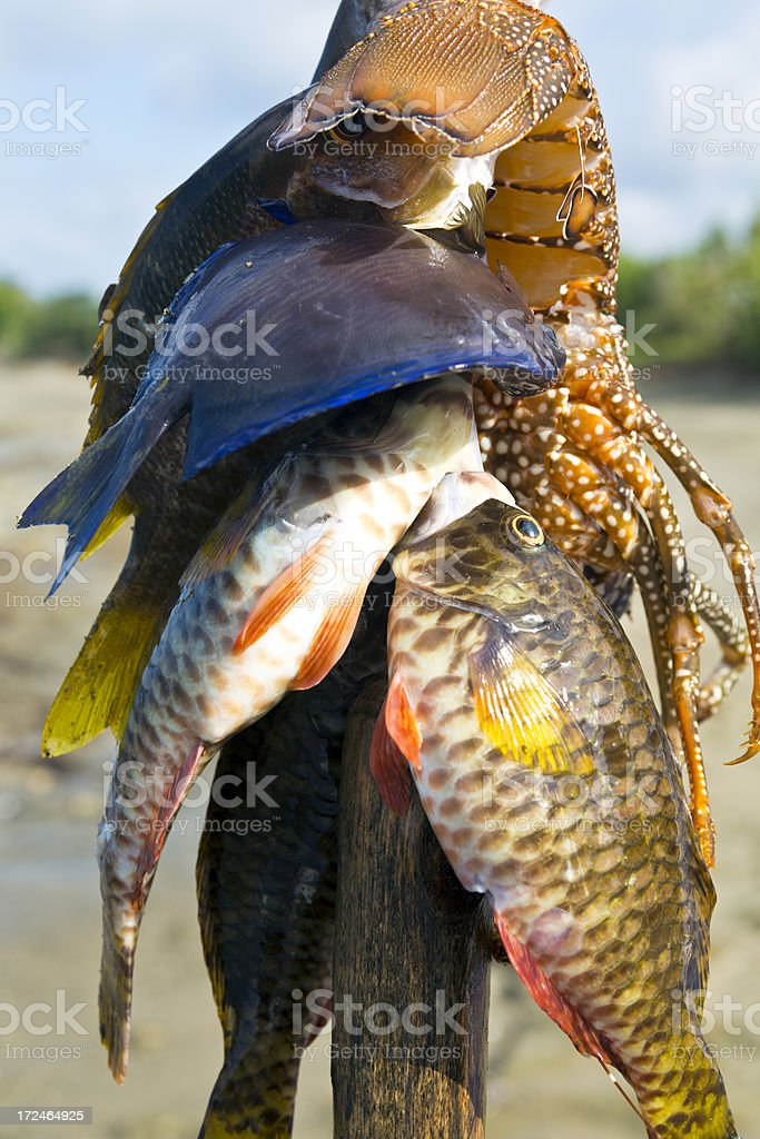 Haiti, Nord-Ouest, St Louis du Nord, fisherman's catch. stock photo