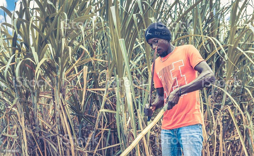 Haitian man on sugar cane plantation stock photo