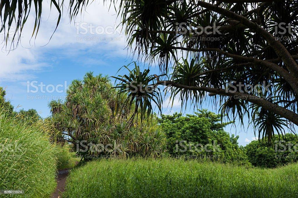 Haleakala National Park, Hana, Maui stock photo