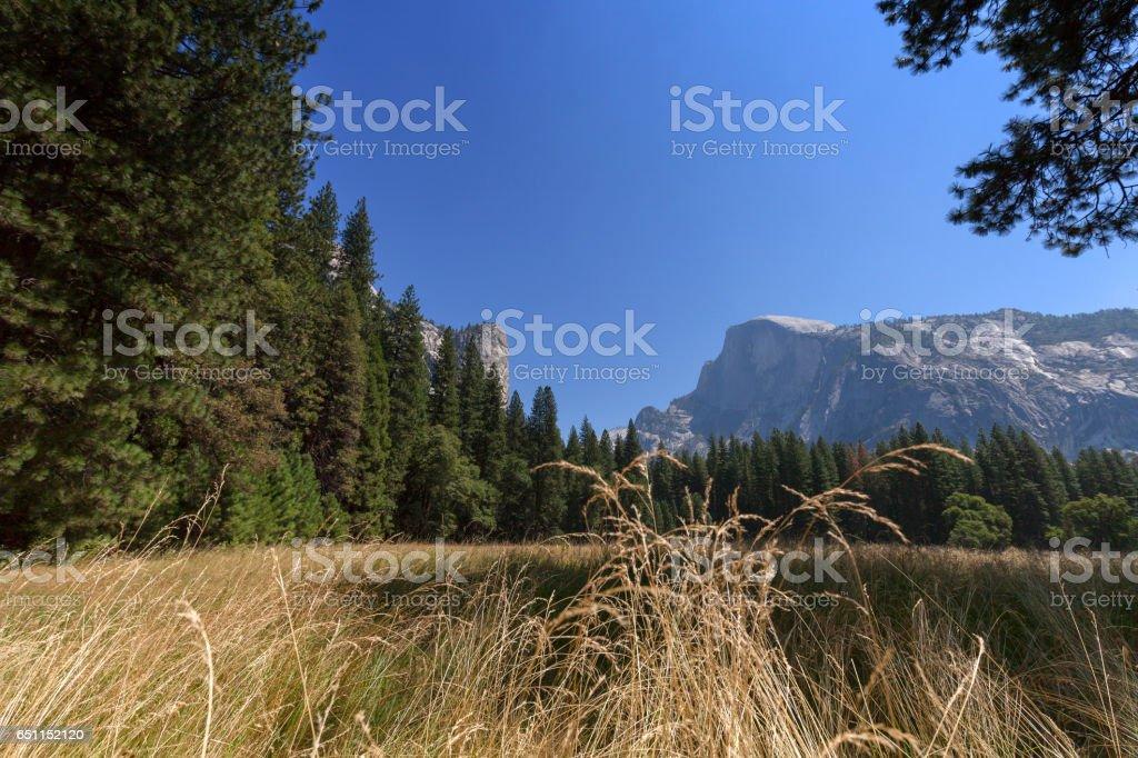 Half Dome Meadow stock photo