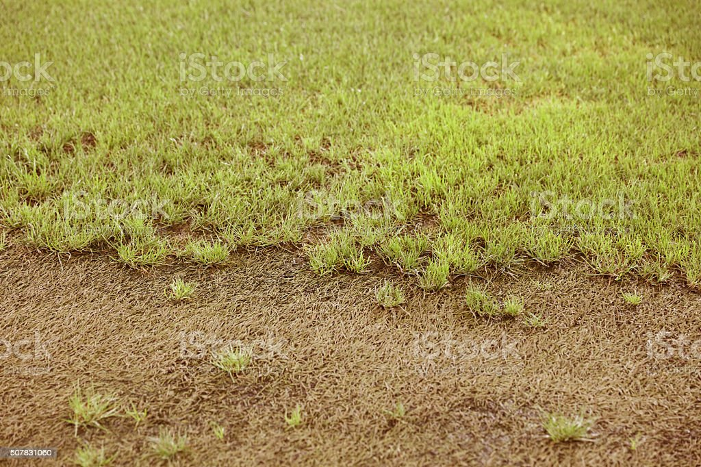 half grass ground stock photo