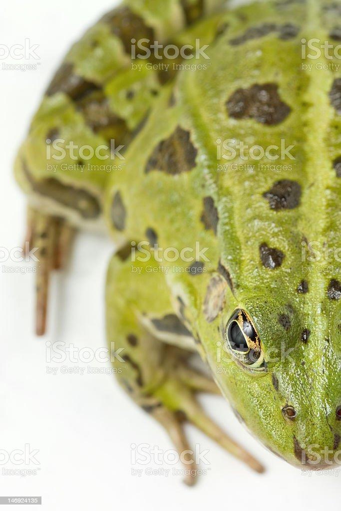 Half green frog stock photo