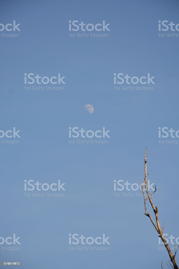 Half Moon Showing in a Clear Sky stock photo