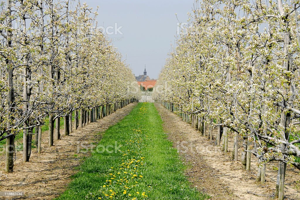 Half standard fruit trees royalty-free stock photo