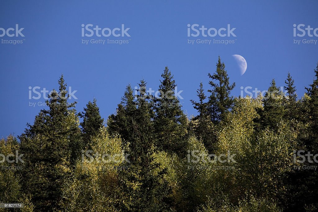 Half-moon shining in the sky over forest royalty-free stock photo