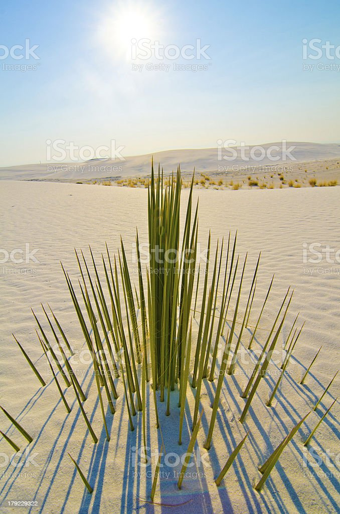 Half-Submerged Yucca at White Sands, New Mexico stock photo