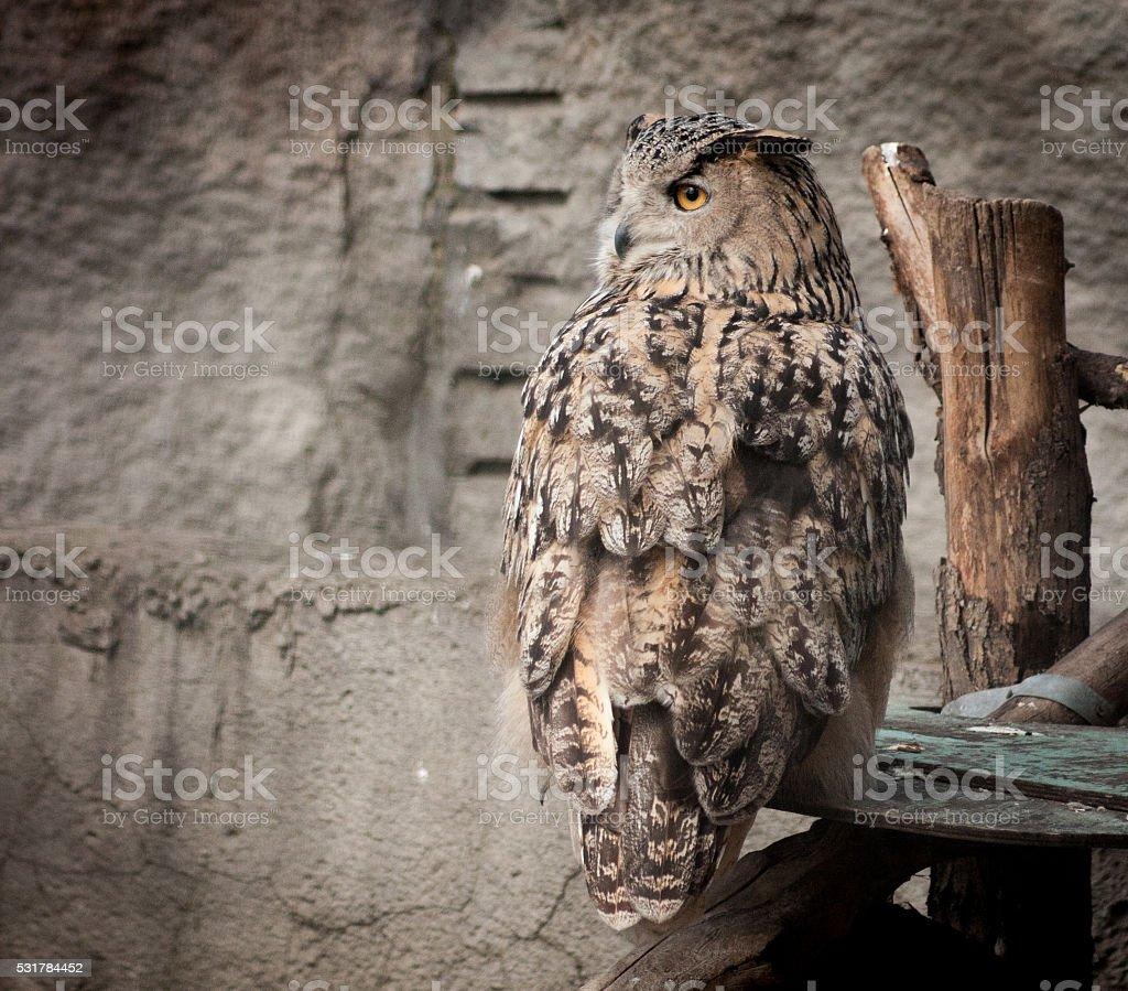 Moitié-tourné brun Hibou photo libre de droits