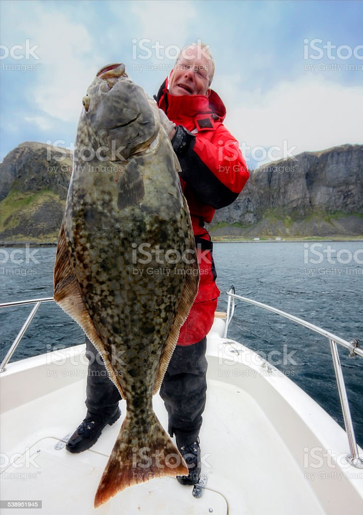 Halibut action  - Large one with 136 lbs stock photo