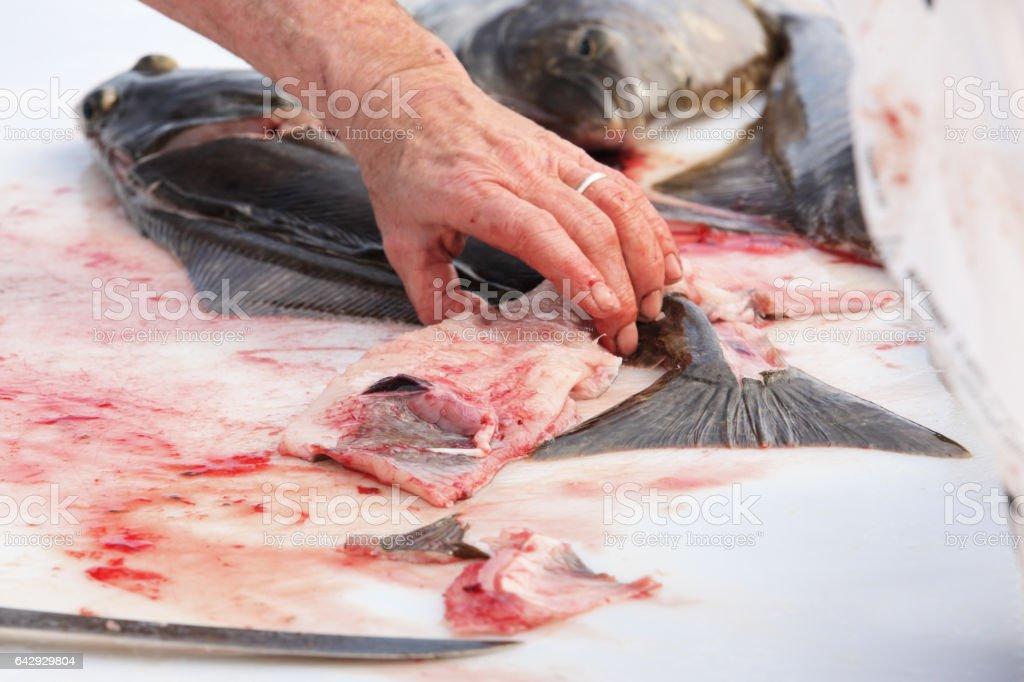 Halibut Flatfish Hippoglossus stenolepis Fish Cleaning stock photo