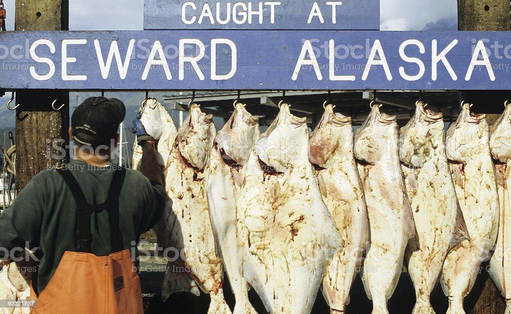 Halibut, Seward Alaska royalty-free stock photo
