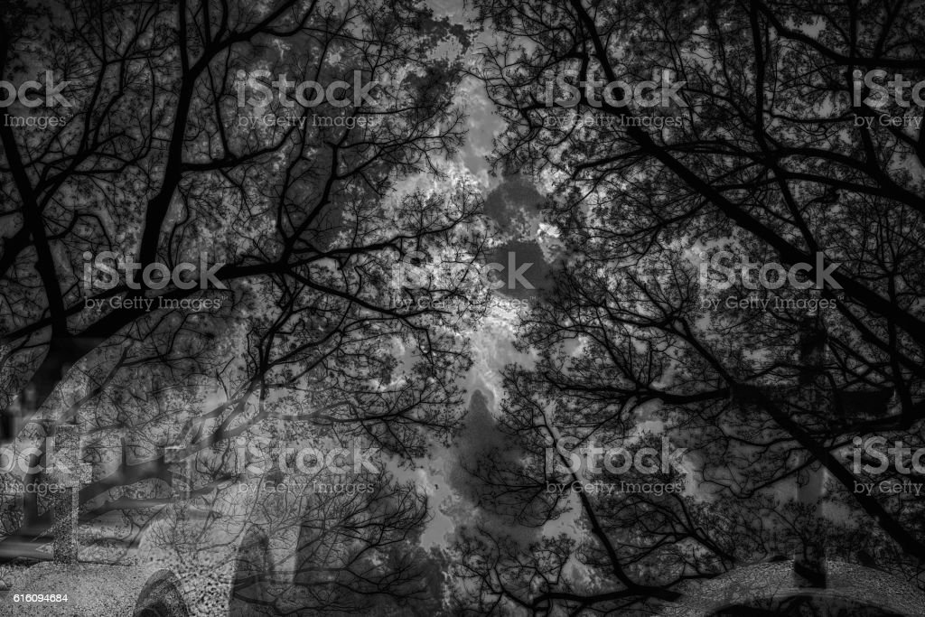 Halloween background.Dead tree branches in the park.Silhouette o stock photo