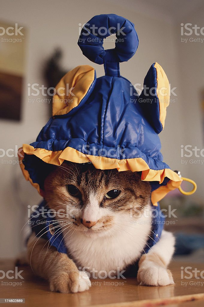 Halloween Cat Costume stock photo