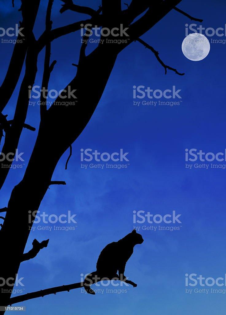 Halloween Cat stock photo