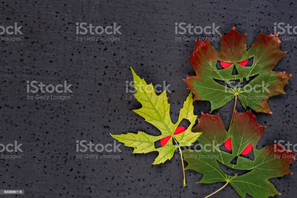 Halloween decor - autumn maple leaves with evil faces and red eyes. Black background. Copy Space stock photo