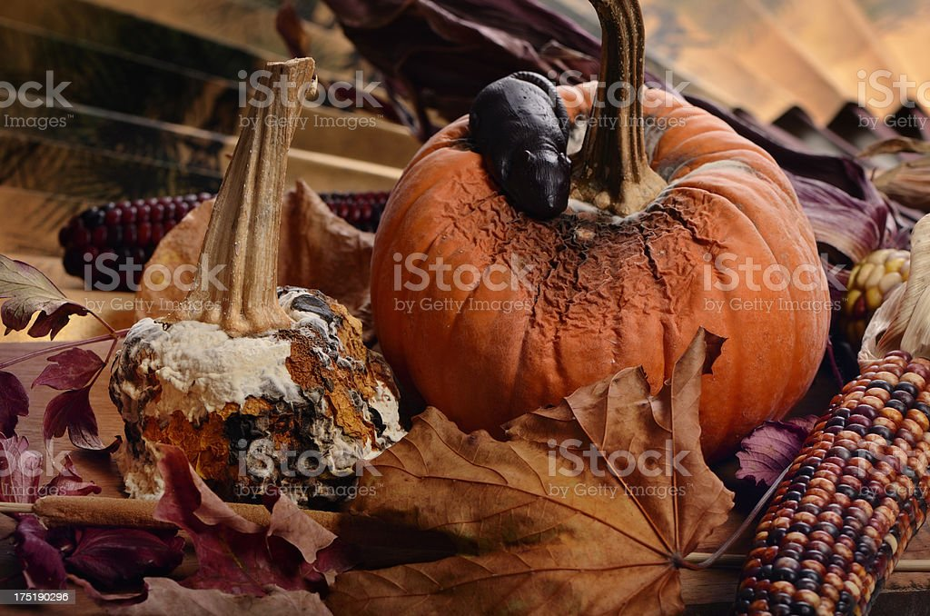 Halloween decorations, rotten pumpkins royalty-free stock photo