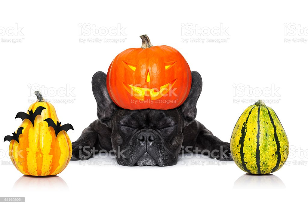 halloween dog  banner stock photo