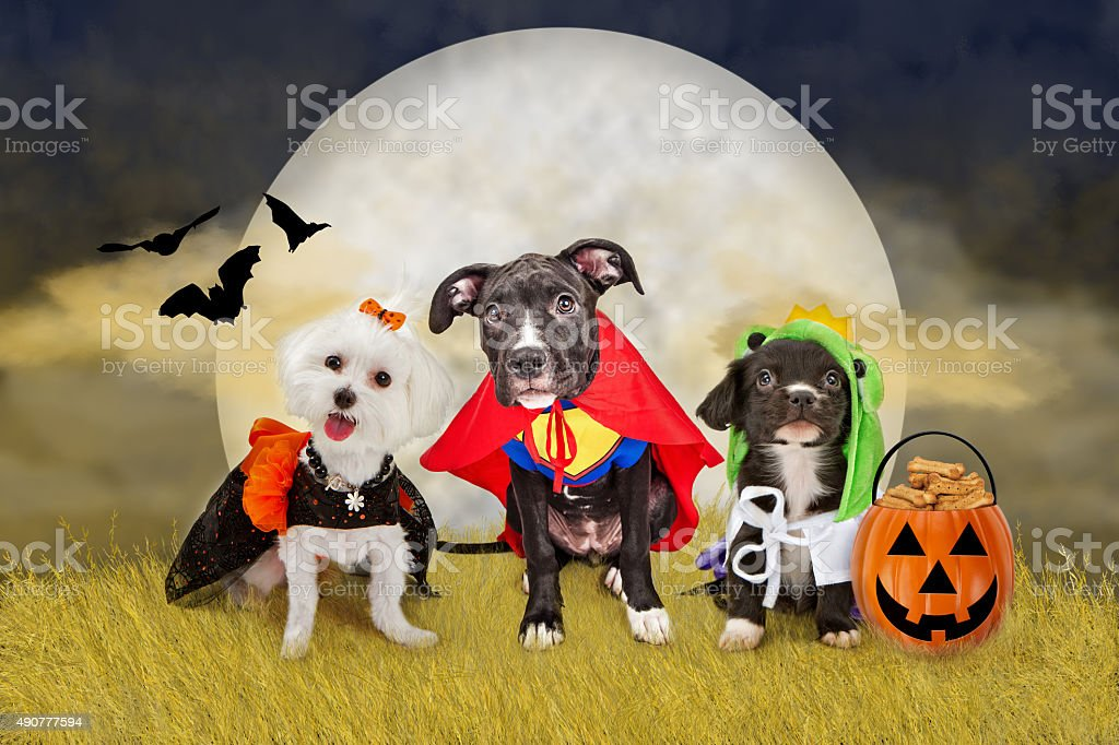 Halloween Dogs in a Field with Moon stock photo
