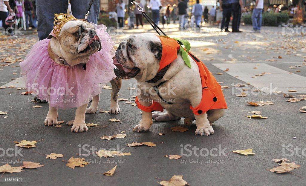 Halloween Duo stock photo
