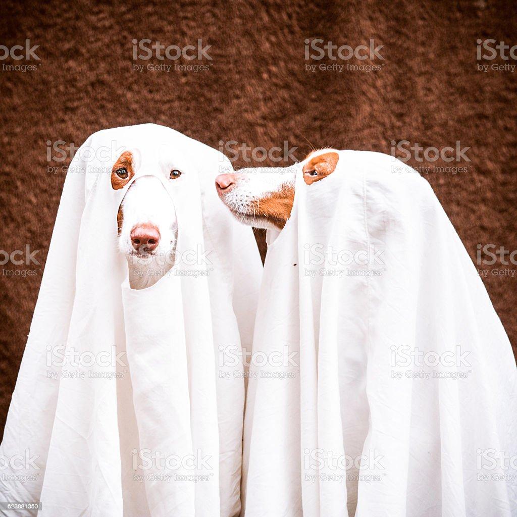 Halloween hounds stock photo